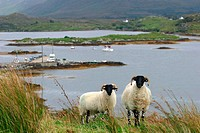 Letterfrack area. Connemara. Ireland.
