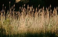 Wetland. El Rocío. Doñana National Park. Huelva. Spain