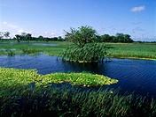 Centla Swamps, Biosphere Reserve, Mexico