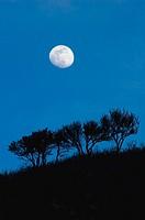 Moonrise over scrub oak trees, Wasatch Mountain foothills, SLC. Utah. USA.