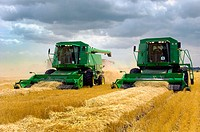 John Deere combines harvesting wheat on a field near Winkler in southern Manitoba. Canada.
