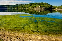 Algal blooms along shore of Simon Lake. Naughton. Ontario