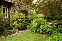 Small lawn flanked by shrubs under Maple w/ corner of stone home (Acer sp.). Boys, Wilmington, DE.