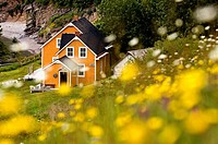 Maison Blanchet (Historic house) and roadside wildflowers along Gulf of St. Lawrence. Gaspésie, Quebec, Canada
