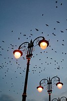 Street light and bird swarm, Sultan Abdul Samad Building, Jalan Raja, Kuala Lumpur, Selangor, Malaysia, Asia