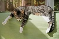 Cat sleeping on sofa in the sun