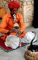 Snake charmer, Jodhpur. Rajasthan, India
