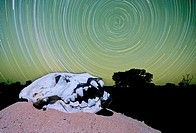 Global Warming, Night sky with hyena skull, Kakahari, South Africa Single exposure with flash  Image not digitally created