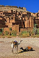 Morocco, near Quarzazate, Ait Benhaddou, Exotic Kasbah, Camels in Foreground