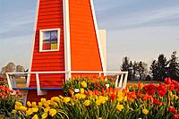 Windmill Replica at Wooden Shoe Tulip Farm - Wooden Shoe Tulip Farm, Oregon