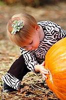 Toddler looking under the pumpkin at the pumkin patch