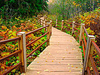 Boardwalk through forest in autumn. Gooseberry Falls State Park. Minnesota. USA