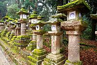 Stone lantern covere with moss at the Kasuga shrine