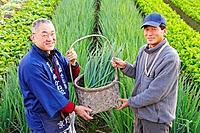 Farmers showing a basket with onionplant, smiling, portrait, Japan