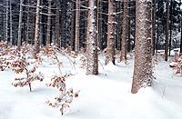 Forest near Starnberg, Germany, Europe