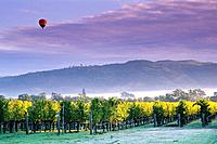 Hot air balloon and clouds at sunrise over vineyards near Oakville, Napa Valley, Napa County, California, USA