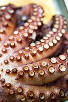Octopus from the ria of El Ferrol. La Coruña province, Galicia, Spain