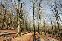 Beechwood in winter, Aitzkorri Natural Park. Guipuzcoa, Basque Country, Spain