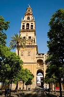 Minaret tower of Great Mosque from Patio de los Naranjos, Cordoba. Andalusia, Spain