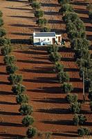 Caseta field.