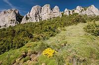 Sierra de Santo Domingo; Zaragoza; Aragón; España