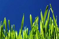 Grass against blue sky