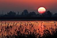 Laguna con flamencos. Puesta de sol en el Delta del Ebro, Tarragona, Cataluña, Spain.