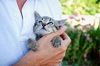 Small tabby cat in man´s hand