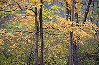 Fall colors at the Riveredge Nature Center in Wisconsin