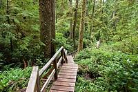 Pacific Rim National Park. Vancouver Island. British Columbia. Canada