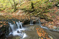Stream at autumn, Selva de Irati forest, Navarra, Pyrenees, Spain