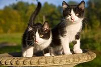 kittens in birdbath