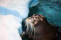 Noruega, Tromso Polaria Museum Seal