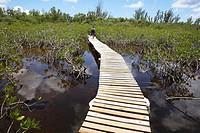 Bahamas, Gran Bahama Island Lucayan National Park