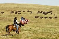 Cowboy at Bison Roundup, Custer State Park, Black Hills, South Dakota, USA