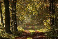Forest cart road in autumn