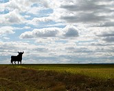 Bull silhouette, typical advertising of Spanish sherry Osborne. Spain