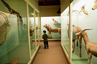 Mammals, Museum of Natural History, Harvard University, Cambridge, Massachusetts, USA