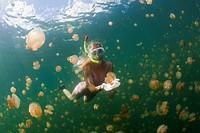 Snorkeling in Jellyfish Lake, Mastigias papua etpisonii, Jellyfish Lake, Micronesia, Palau