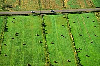 Road-and-Fields