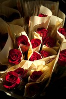 Red roses, St George´s Day Catalan holiday