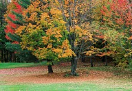 Trees-Autumn-Colors