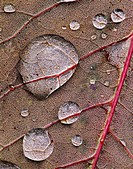 Water-drops-on-leaf