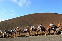 Camel tour at Timanfaya National Park, Lanzarote. Canary islands, Spain