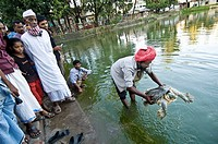 Pilgrims with Bostami Turtle at the pond of the Shrine of Bayazid Bostami, Chittagong, Bangladesh