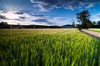 Cereal fields. La Rioja.
