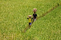 A mother and daughter walking between rice fields with woven baskets being carried on their heads.