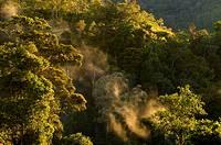 Sunrise in the mountain rainforest Kinabalu National Park Sabah Borneo Malaysia