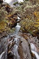 Creek in the Kitandara Valley 4100m, Rwenzoris Africa, East Africa, Uganda, Rwenzori, January 2009