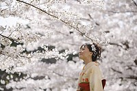 Woman in Kimono Looking At Cherry Blossoms